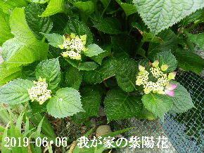 2019-06・06 我が家の庭で・・・ (2).JPG