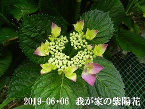 2019-06・06 我が家の庭で・・・ (3).JPG