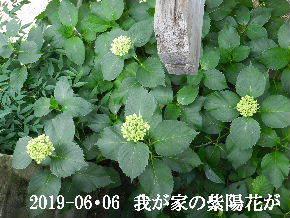 2019-06・06 我が家の庭で・・・ (4).JPG