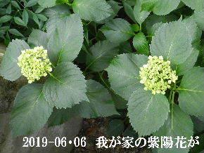 2019-06・06 我が家の庭で・・・ (6).JPG