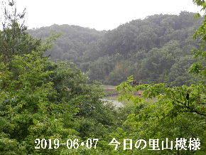 2019-06・07 今日の里山模様・・・ (3).JPG