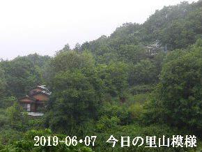 2019-06・07 今日の里山模様・・・ (4).JPG