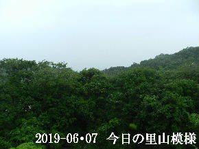 2019-06・07 今日の里山模様・・・ (5).JPG