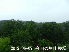2019-06・07 今日の里山模様・・・ (6).JPG