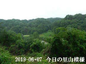 2019-06・07 今日の里山模様・・・ (7).JPG