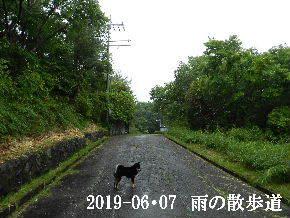 2019-06・07 今日の里山模様・・・ (8).JPG