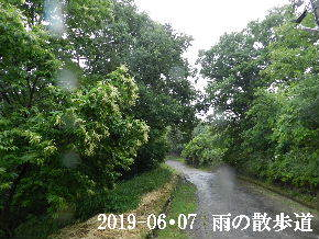 2019-06・07 今日の里山模様・・・ (9).JPG