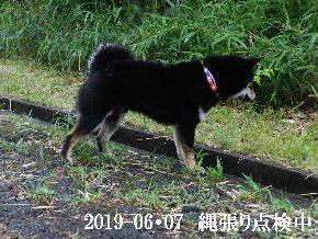 2019-06・07 今日の麻呂 (3).JPG