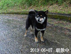 2019-06・07 今日の麻呂 (4).JPG