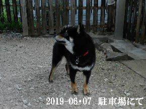 2019-06・07 今日の麻呂 (6).JPG