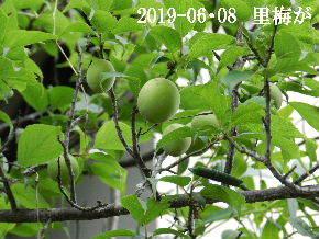 2019-06・08 今日の出遭い・・・ (1).JPG