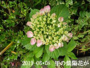 2019-06・08 今日の出遭い・・・ (3).JPG
