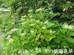 2019-06・08 今日の出遭い・・・ (4).JPG