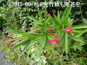 2019-06・08 今日の出遭い・・・ (6).JPG