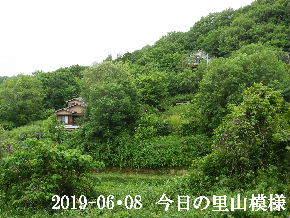 2019-06・08 今日の里山模様・・・ (4).JPG