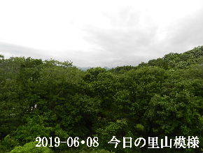 2019-06・08 今日の里山模様・・・ (5).JPG