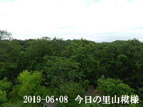 2019-06・08 今日の里山模様・・・ (6).JPG