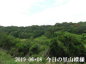 2019-06・08 今日の里山模様・・・ (7).JPG