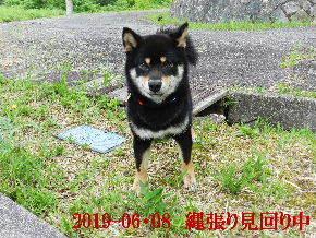2019-06・08 今日の麻呂 (1).JPG