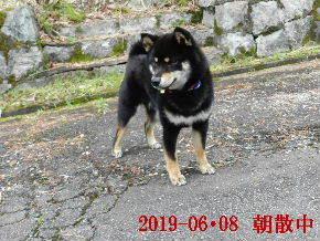 2019-06・08 今日の麻呂 (2).JPG