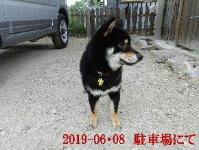 2019-06・08 今日の麻呂 (5).JPG
