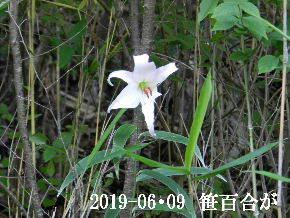 2019-06・09 今日の出遭い・・・ (1).JPG
