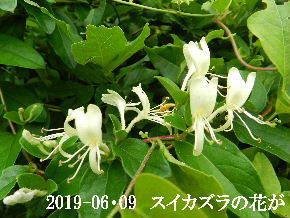 2019-06・09 今日の出遭い・・・ (4).JPG