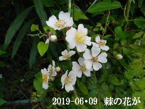 2019-06・09 今日の出遭い・・・ (5).JPG