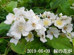 2019-06・09 今日の出遭い・・・ (6).JPG