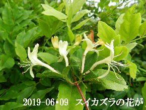 2019-06・09 今日の出遭い・・・ (7).JPG