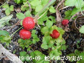 2019-06・09 今日の出遭い・・・ (8).JPG