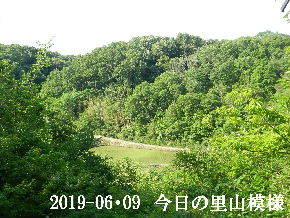 2019-06・09 今日の里山模様・・・ (3).JPG
