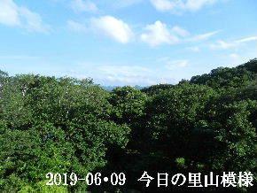 2019-06・09 今日の里山模様・・・ (5).JPG