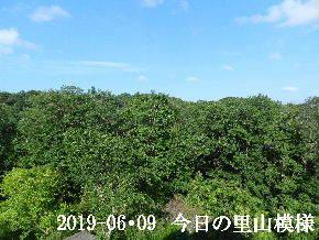 2019-06・09 今日の里山模様・・・ (6).JPG
