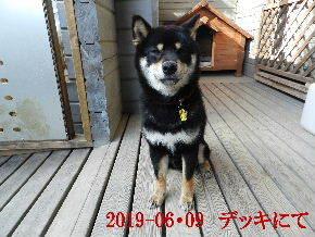 2019-06・09 今日の麻呂 (2).JPG