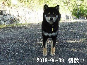 2019-06・09 今日の麻呂 (5).JPG