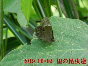 2019-06・09 里の昆虫達・・・ (1).JPG