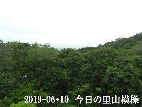 2019-06・10 今日の里山模様・・・ (5).JPG