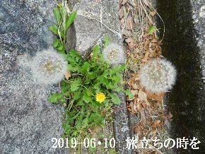 2019-06・10 今日の麻呂 (2).JPG