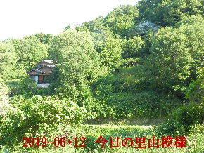 2019-06・12 今日の里山模様・・・ (4).JPG