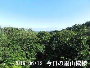 2019-06・12 今日の里山模様・・・ (5).JPG