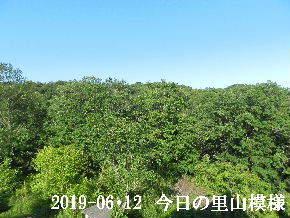 2019-06・12 今日の里山模様・・・ (6).JPG