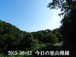2019-06・12 今日の里山模様・・・ (8).JPG