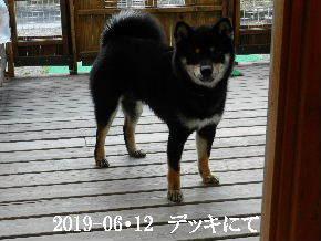 2019-06・12 今日の麻呂 (1).JPG