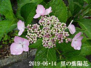 2019-06・14 今日の出遭い・・・ (4).JPG
