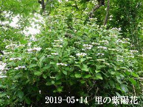 2019-06・14 今日の出遭い・・・ (5).JPG
