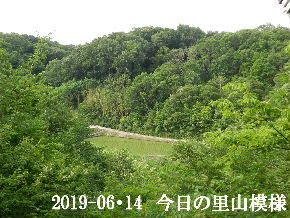 2019-06・14 今日の里山模様・・・ (3).JPG