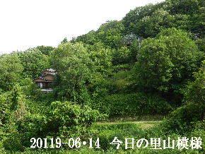 2019-06・14 今日の里山模様・・・ (4).JPG