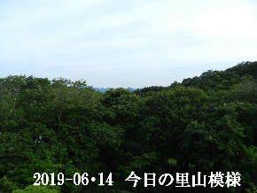 2019-06・14 今日の里山模様・・・ (5).JPG