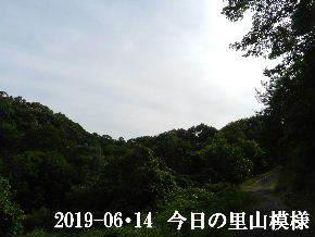 2019-06・14 今日の里山模様・・・ (8).JPG